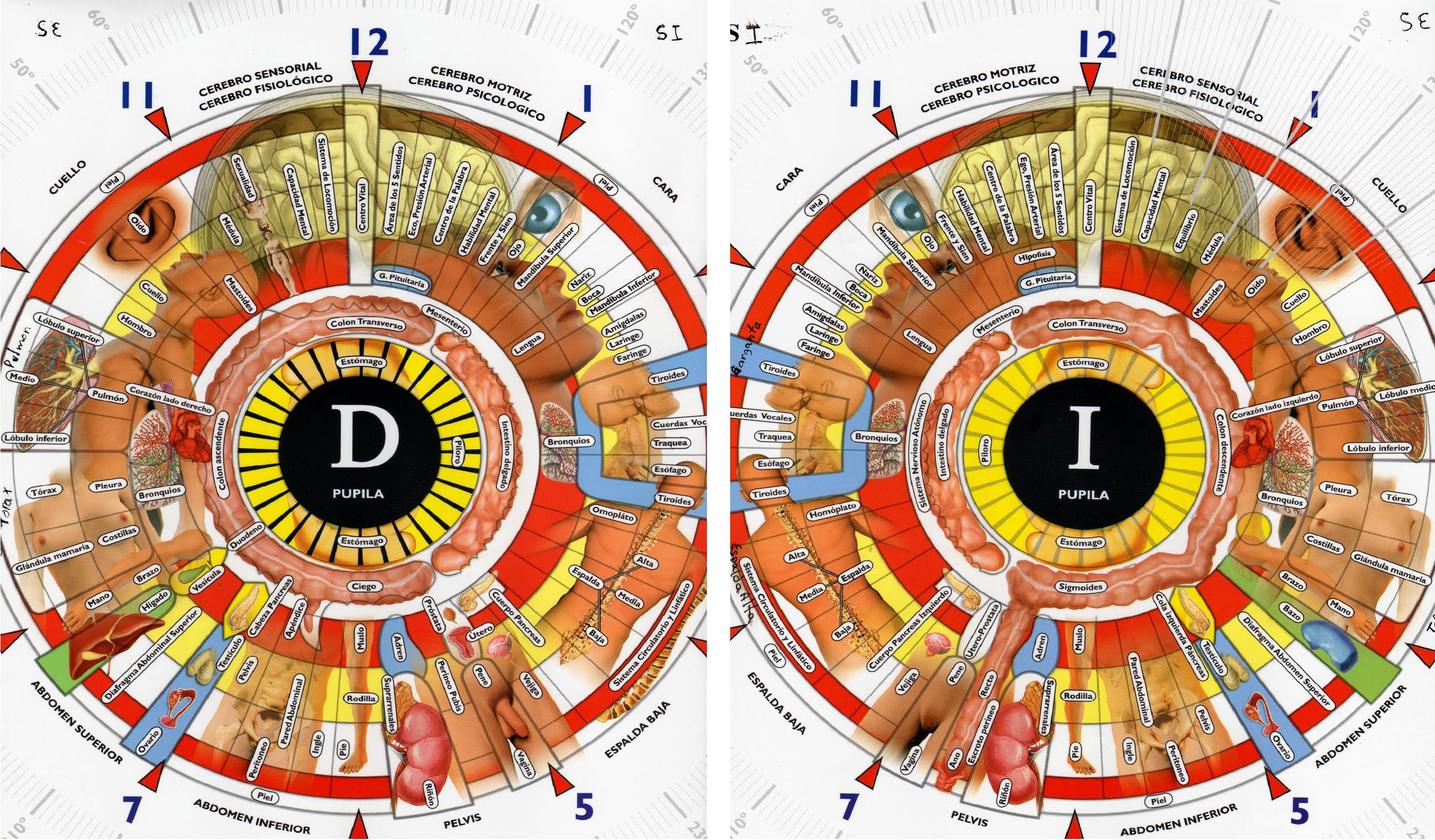 Gráfica iris izquierdo-derecho H.W