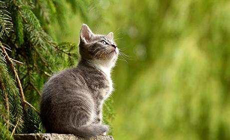 cursos reiki madrid, reikiterapias, dar reiki a los animales